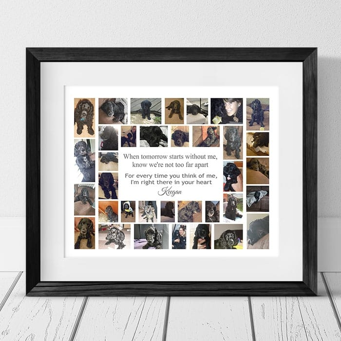 When Tomorrow Starts Without Me, Pet Remembrance Collage