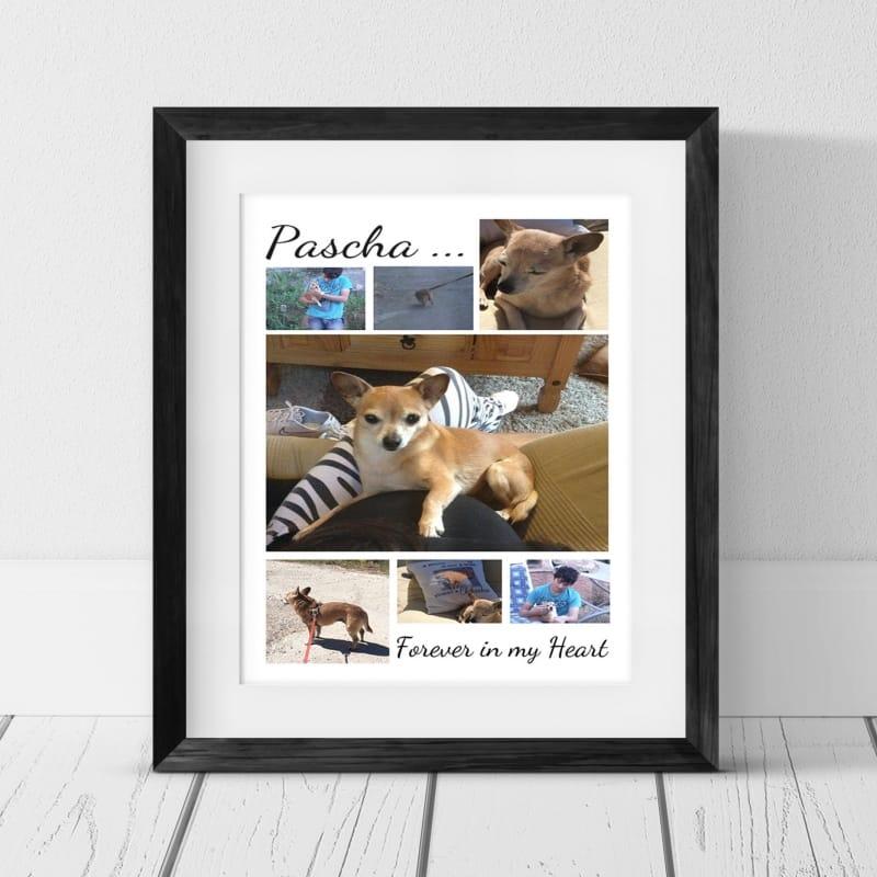 7 Photo Collage - Pet Remembrance