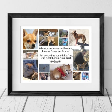 When Tomorrow Starts Without Me,  13 photo Pet Remembrance Collage